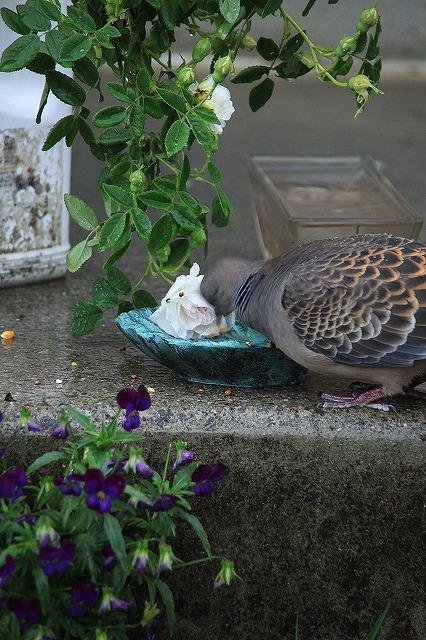 IMG_5524あっちゃんのお庭