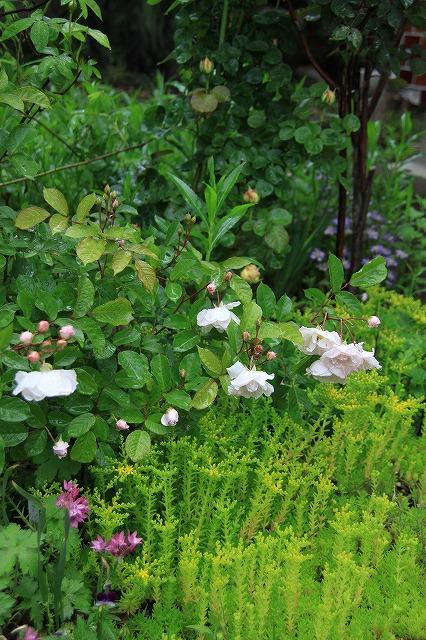 IMG_5541あっちゃんのお庭