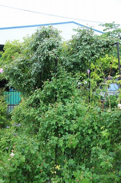 IMG_5544あっちゃんのお庭