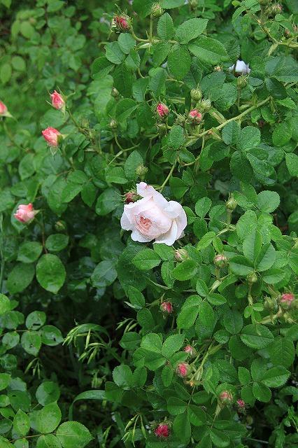 IMG_5547あっちゃんのお庭
