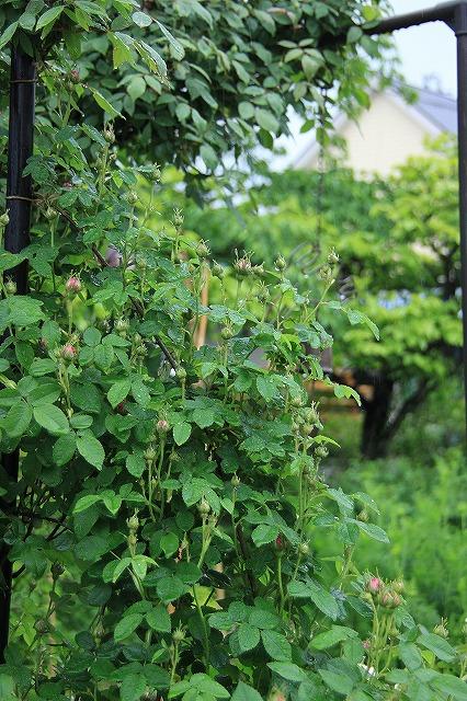 IMG_5550あっちゃんのお庭