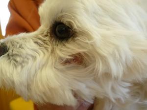 眼窩下膿瘍 術前1