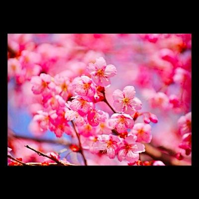 th_photo20120328202728.jpg