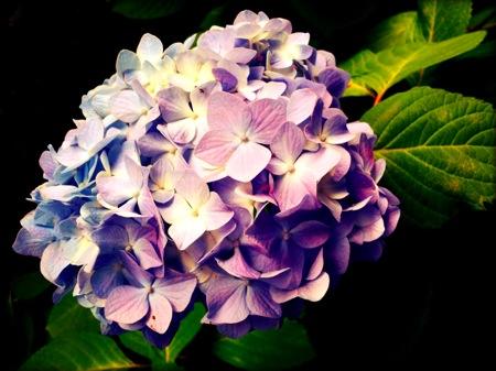 th_photo20120613132101.jpg