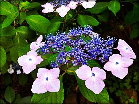th_photo20120613132126.jpg