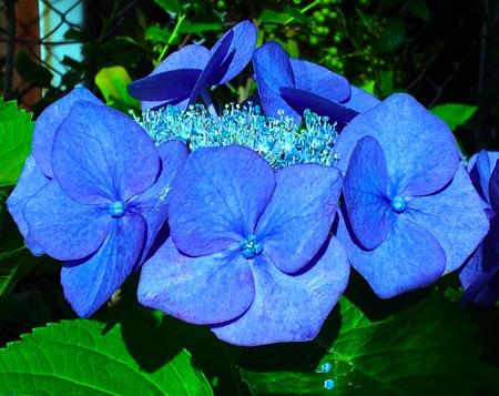 th_photo20120626103138.jpg