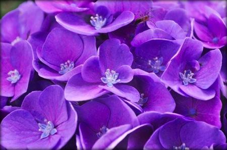 th_photo20120711203559.jpg