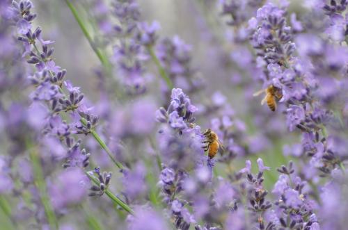 おきにいり二ひきの蜂クン