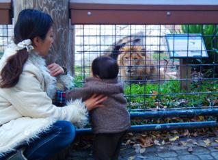 ライオン近いっ><