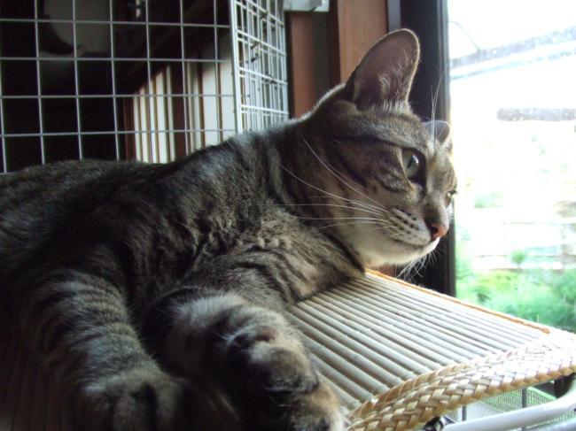 ミオ、ケージ屋上で外見る10-3040_幅650