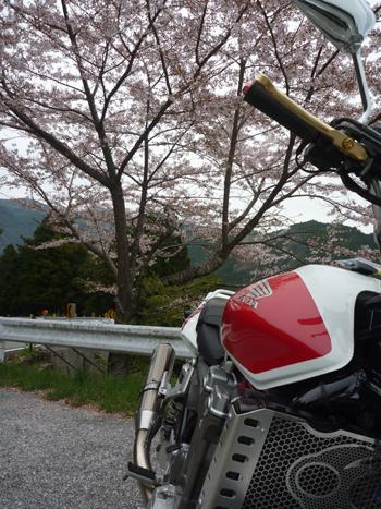 hikari201204135.jpg