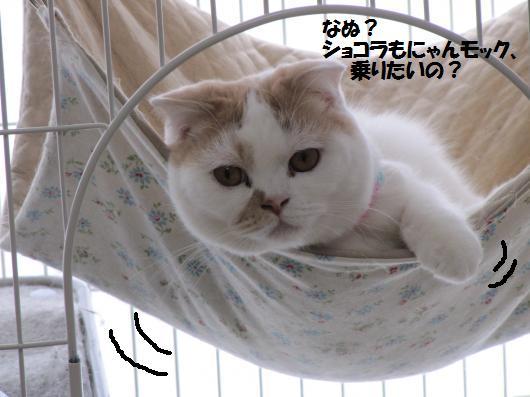 IMG_3000_cc.jpg