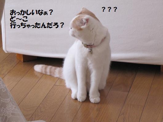 IMG_3740_cc.jpg