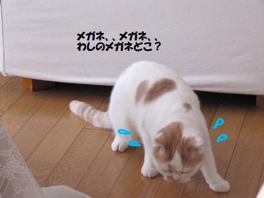 IMG_3741_cc.jpg