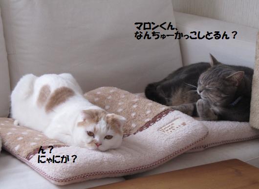 IMG_3773_cc.jpg