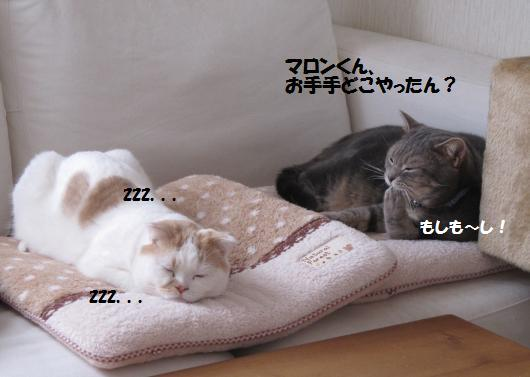 IMG_3774_cc.jpg