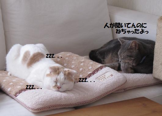 IMG_3775_cc.jpg