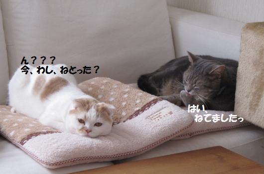 IMG_3777_cc.jpg