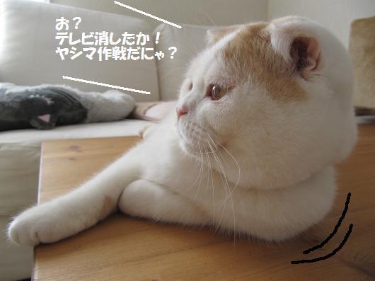 IMG_3858_cc.jpg