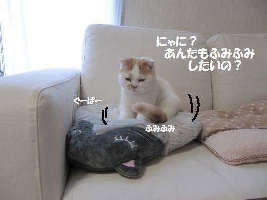 IMG_3868_cc.jpg