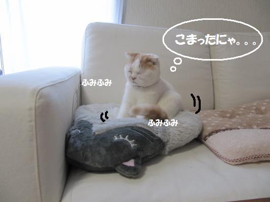 IMG_3870_cc.jpg