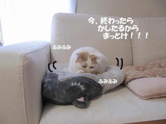 IMG_3874_cc.jpg