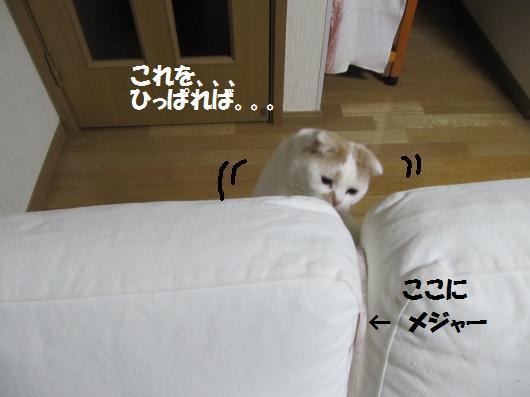 IMG_3938_co.jpg