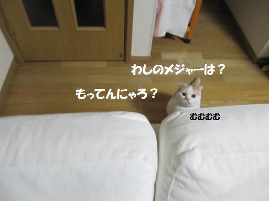 IMG_3941_co.jpg