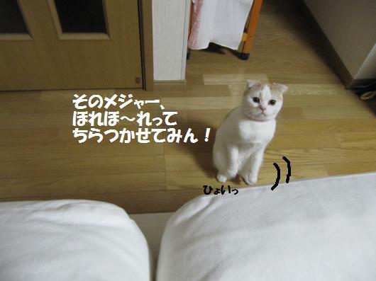 IMG_3942_co.jpg