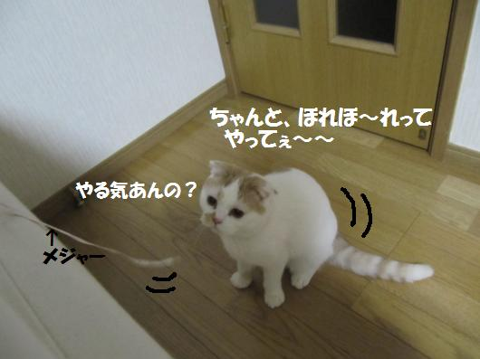 IMG_3947_co.jpg