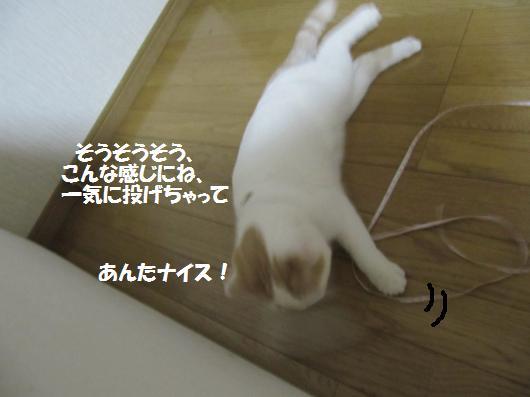 IMG_3953_co.jpg