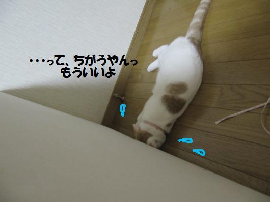 IMG_3954_co.jpg