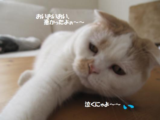 IMG_4030_cc.jpg