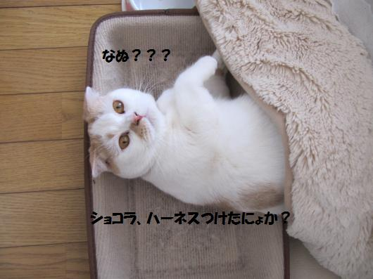 IMG_4166_cc.jpg
