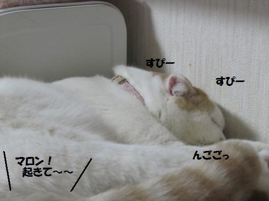 IMG_4178_cc.jpg