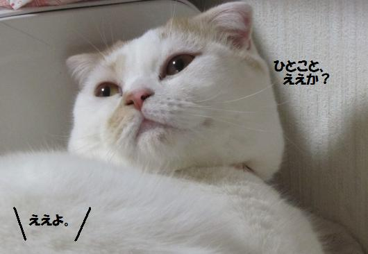 IMG_4184_cc.jpg