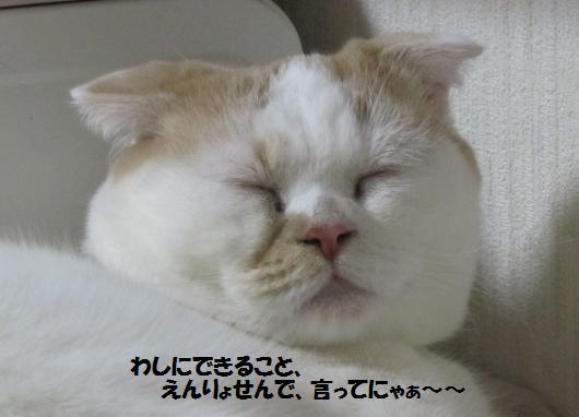 IMG_4187_cc.jpg