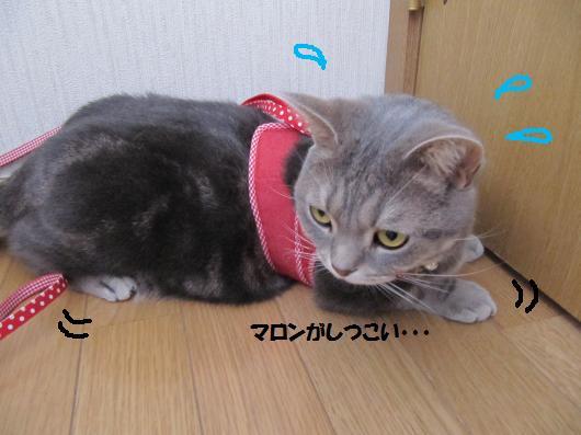 IMG_4423_cc.jpg