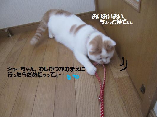 IMG_4426_cc.jpg