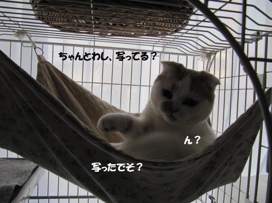 IMG_4511_cc.jpg