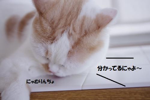 a1m6.jpg