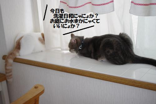 aidema5.jpg