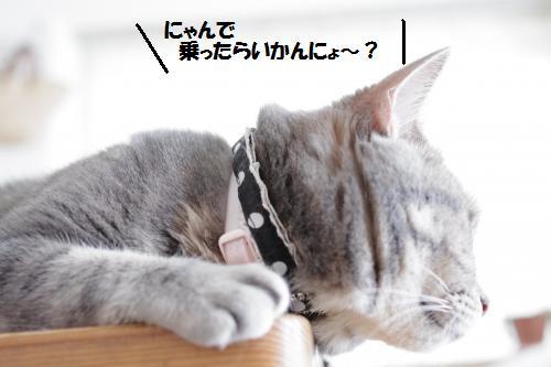 ashomateb3.jpg