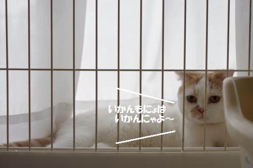ashomateb4.jpg