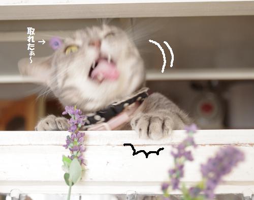 ashosu2.jpg