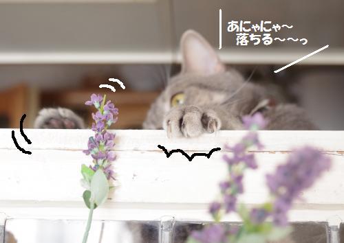 ashosu3.jpg