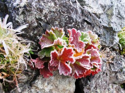 凍りついた草紅葉