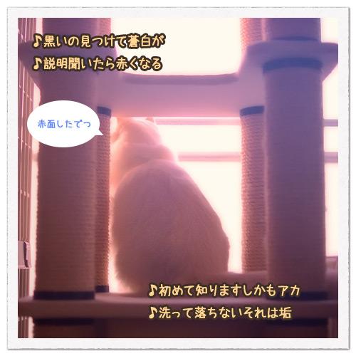 20110810_3.jpg