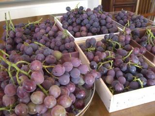葡萄の山積み