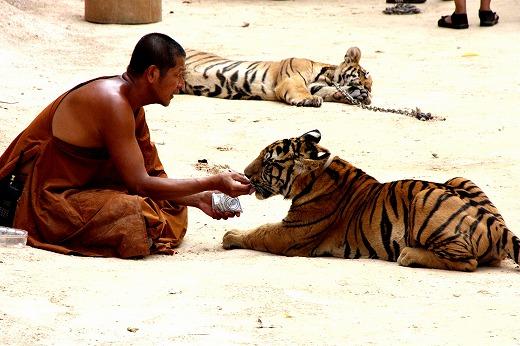 坊様と虎様